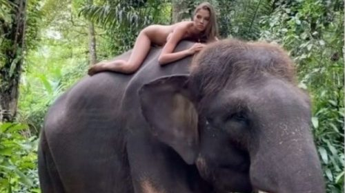 Animal right activists condemn Instagram influencer who posed nude on top of a Elephant in  Indonesia